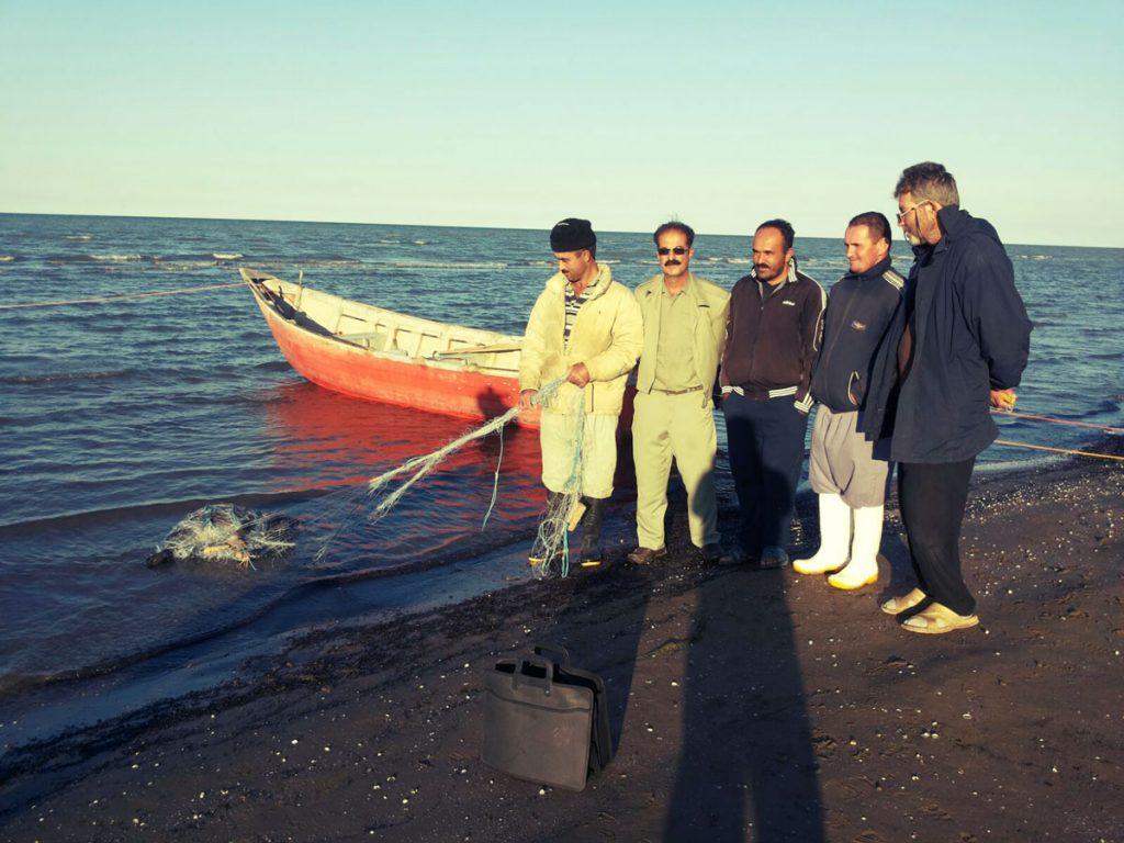 Иранские рыбаки спасают каспийского тюленя, запутавшегося в сетях.