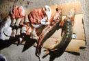 Перевозчик тюленьего мяса задержан в Атырау