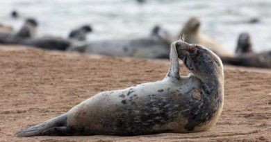 Moratorium on the Caspian seal commercial hunting