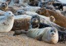 Тюлень без защиты
