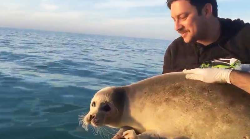 The release of the Caspian seal back to the Caspian sea, Iran