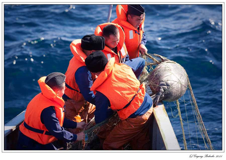 The Border guards are pulling fishing net with a dead Caspian seal out of the water.
