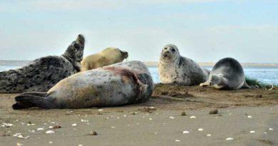 Сохраним каспийского тюленя