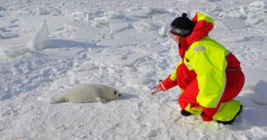 Каспийский тюлень в Красной книге Дагестана!