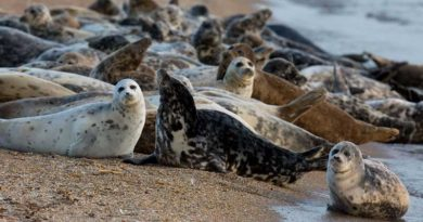 The status of parenchymatous organs of the Caspian seal…