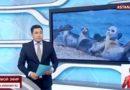 Заповедник для каспийского тюленя