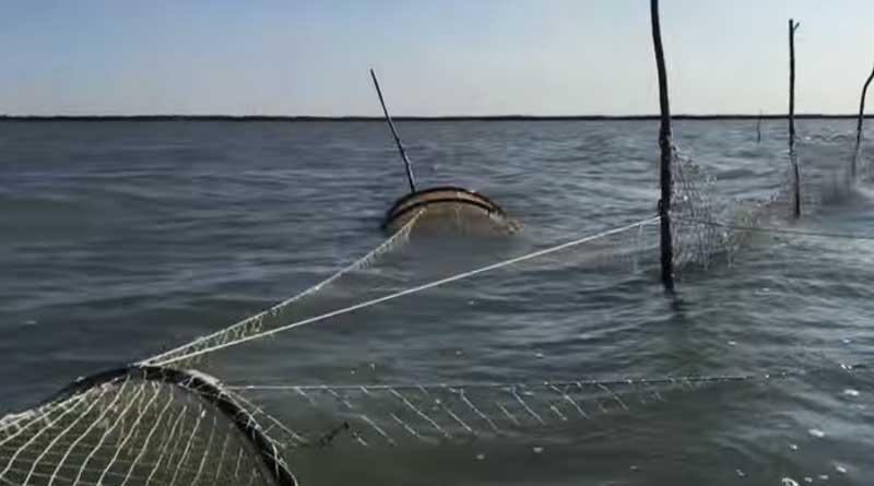 Illegal sturgeon fishing net. The Caspian, Kazakhstan.