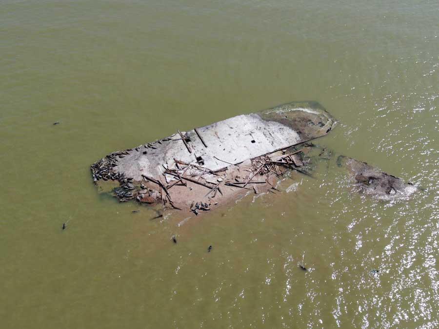 Каспийские тюлени на остатках брандвахты. Фотография Максима Перковского.