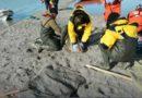 Пути миграции тюленей отслеживают с помощью спутниковых меток