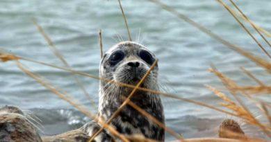 On abundance, distribution and mortality of Caspian seals