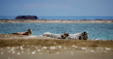 Caspian seals empathize with each other