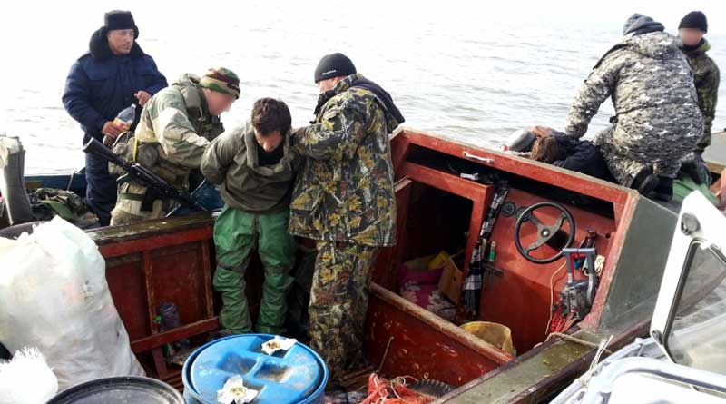 Astrakhan border guards caught poachers having Caspian seal skins