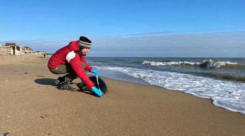 Шумейко Н.Р., сотрудник ИПЭЭ РАН, руководитель Агентства по спасению каспийских тюленей «Каспика». Фотография Ирины Суворовой.