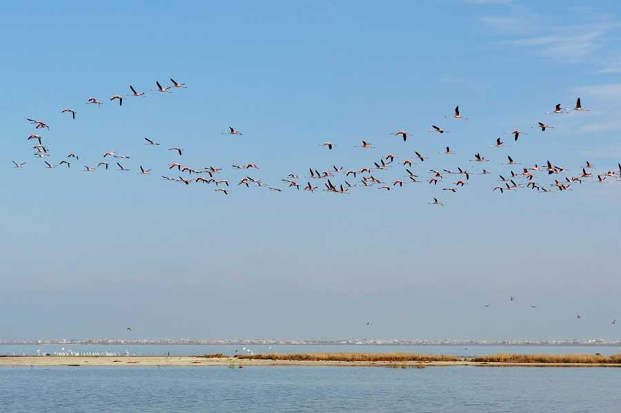 Ashuradeh Island, the Gorgan Bay, Iran, the Caspian Sea. Photo by Nataliya Shumeyko.