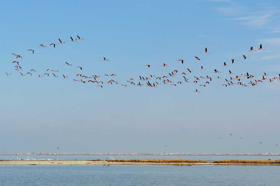Остров Ашур-Ада, Горганский залив, Иран, Каспий. Фотография Шумейко Наталии.