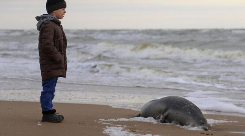 The mass death of Caspian seals, the Caspian Sea, Dagestan.