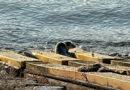 Нефтяники спасли тюлененка