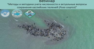 Международный вебинар по каспийскому тюленю