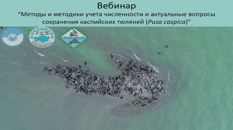II Международный вебинар «Методы и методики учета численности и актуальные вопросы сохранения популяции каспийского тюленя (Pusa сaspica)».