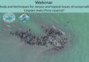 International webinar on the Caspian seal