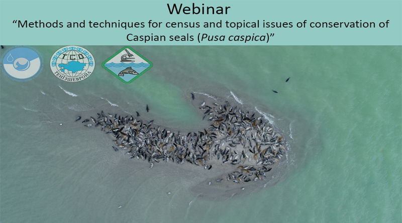 II International Webinar 'Methods and methodologies for census and topical issues of preservation of the Caspian seal population (Pusa caspica).
